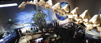 Origins:  Fossils from the Cradle of Humankind