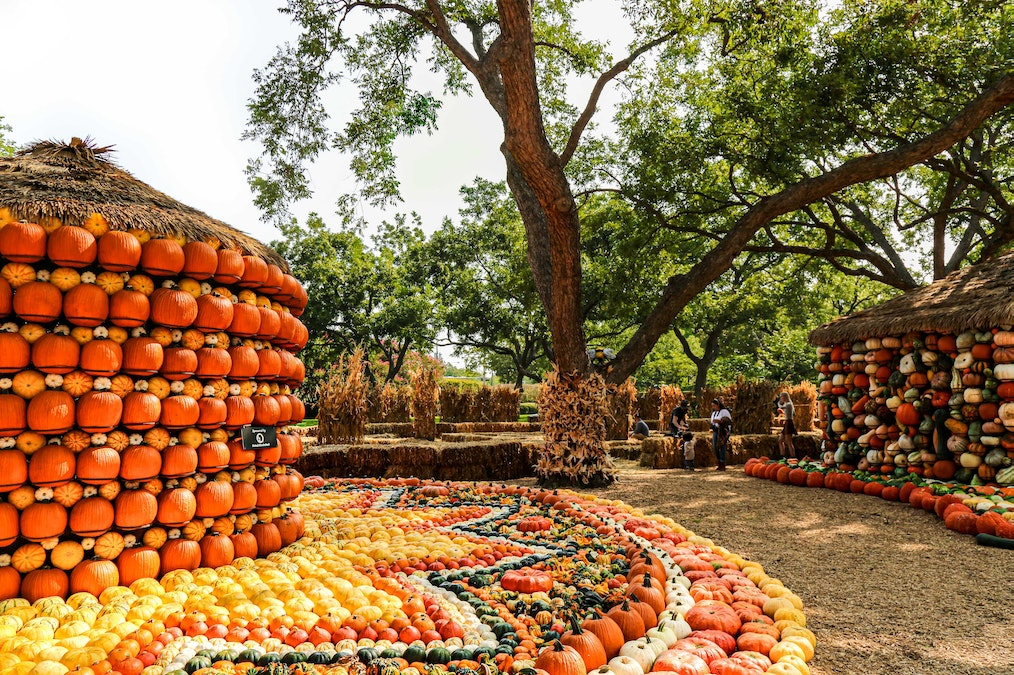 Things to do in Dallas this Halloween