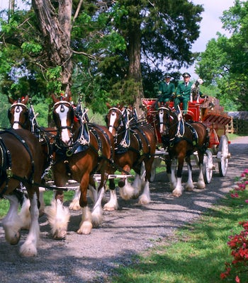 the budweiser clydesdales are coming to the state fair of texas
