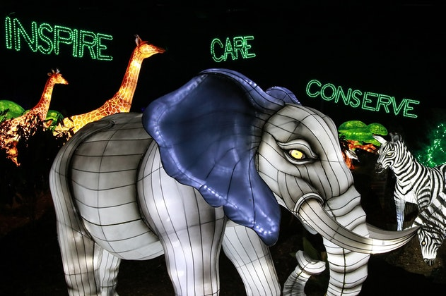 Dallas Zoo Lights