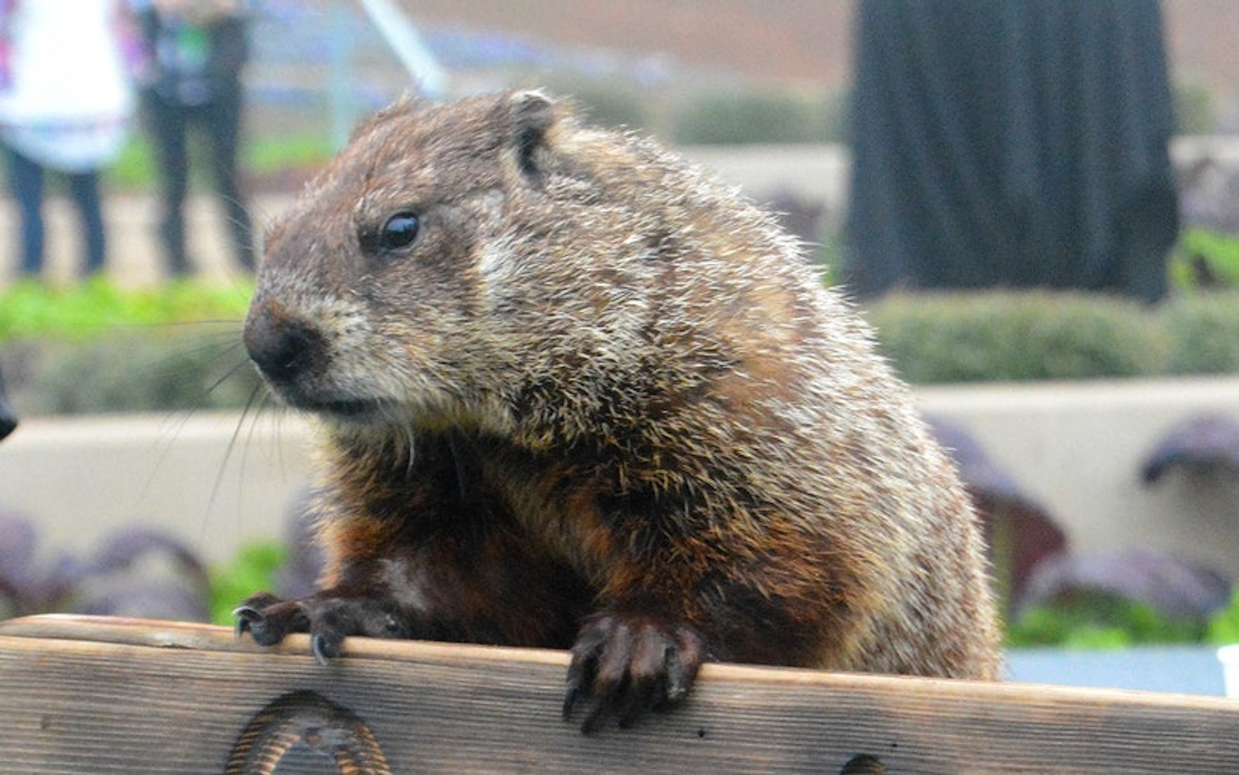 Dallas Arboretum's Groundhog Day