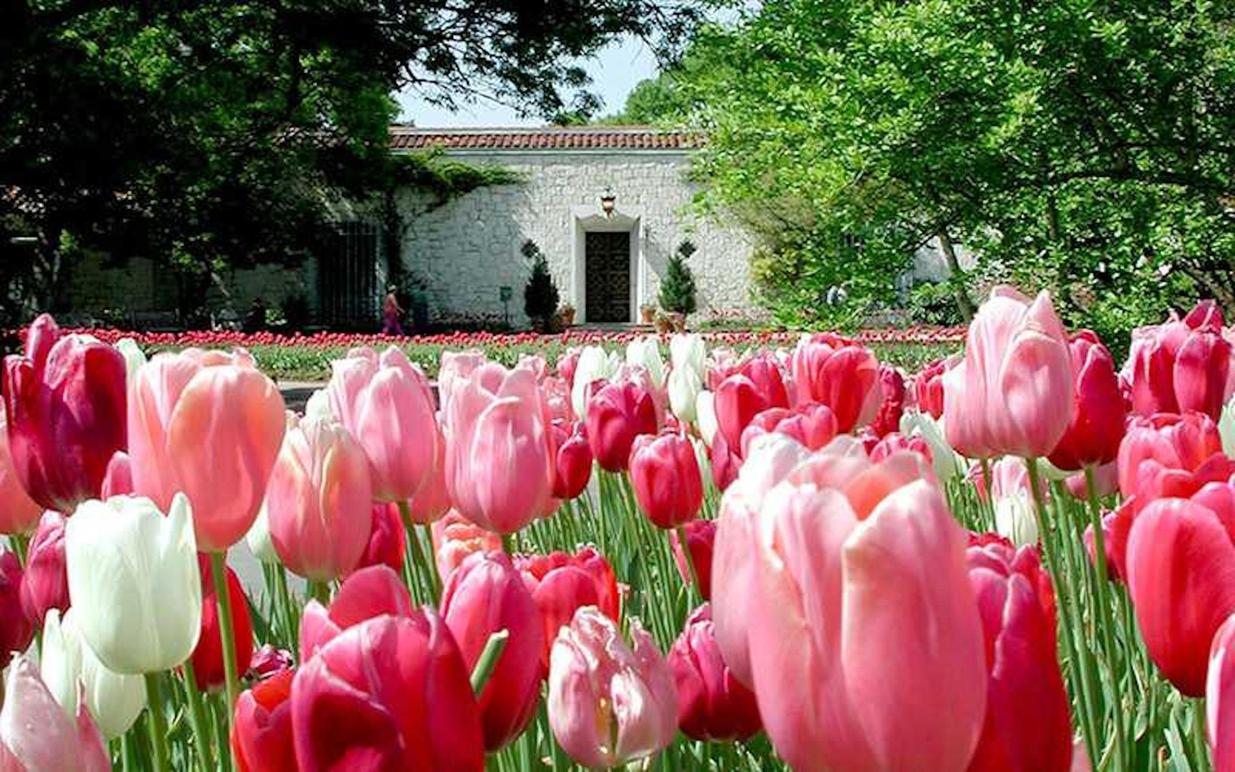 """Dallas Arboretum's Dallas Blooms: """"America the Beautiful"""" (Mar 9, 2021 @  9:00 am - 5:00 pm)"""