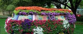 Dallas Blooms: Flower Power at the Dallas Arboretum