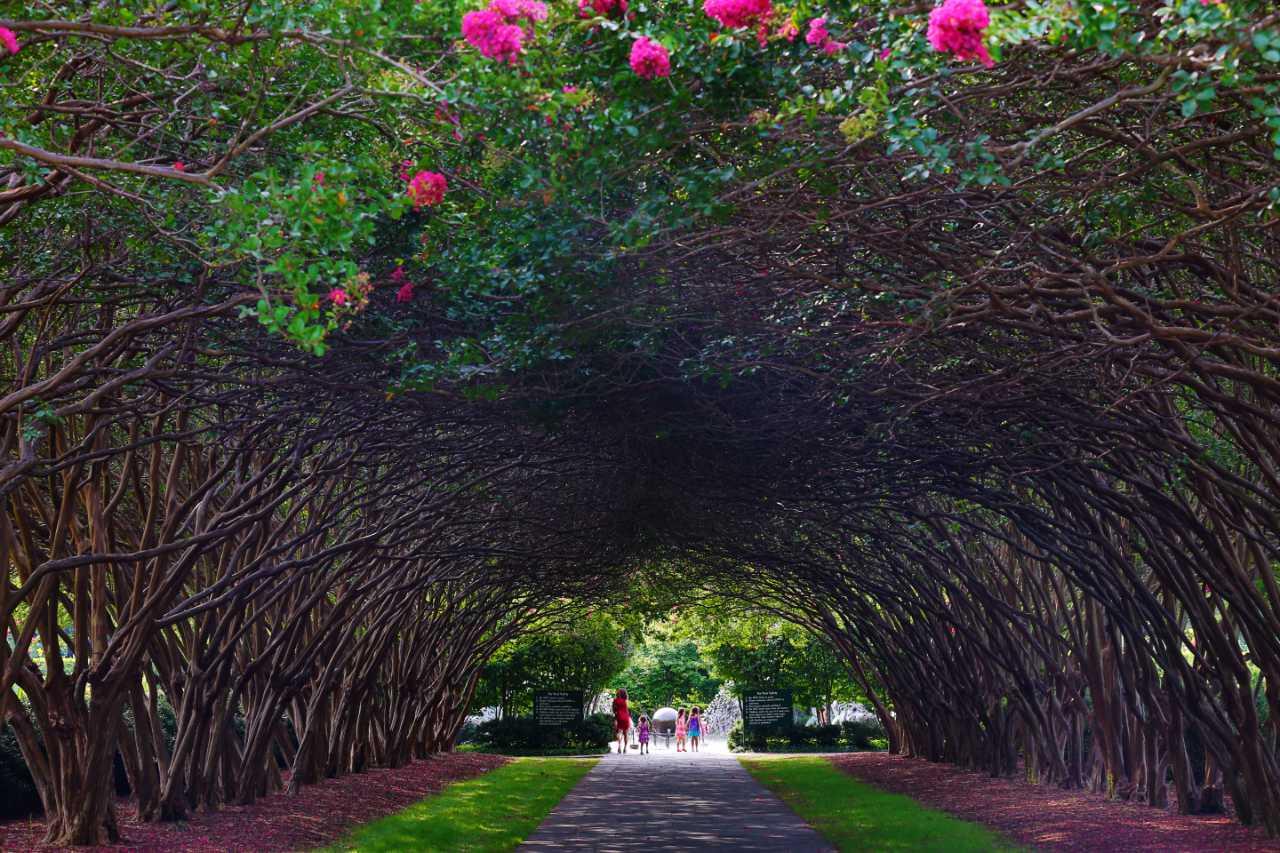 Dallas Arboretum Photo Gallery