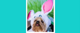 BarkHappy Dallas Easter Pawty & Egg Hunt for Paws In The City!