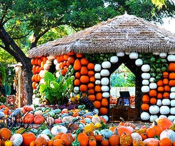 Autumn at the arboretum nov 18 2017 9 00 am 5 00 pm - Dallas home and garden show 2017 ...