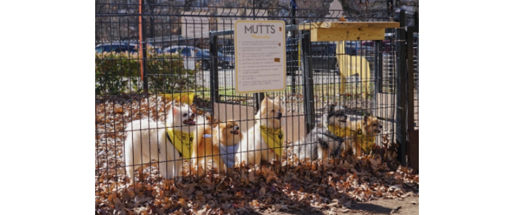 MUTTS Canine Cantina Breed Meetup - Pugs