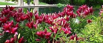 Garden Gigs at the Arboretum