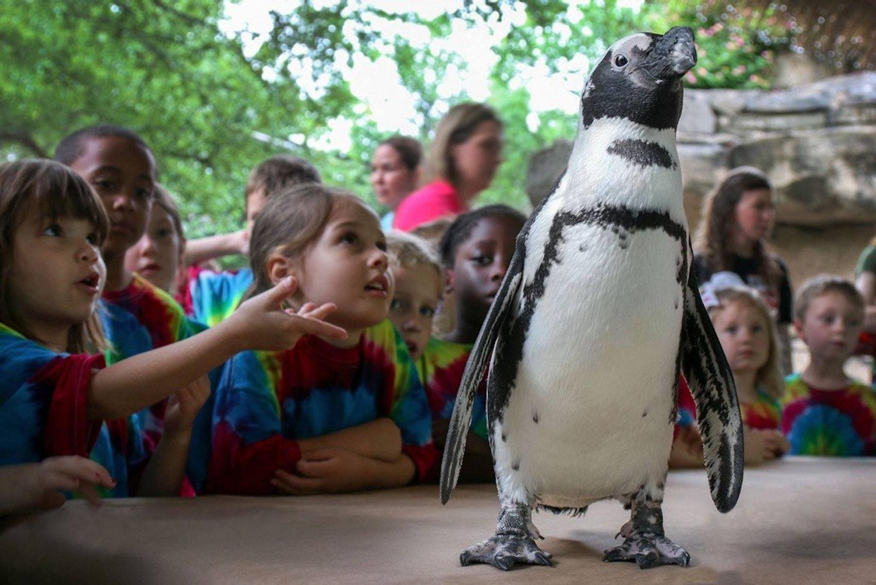 Dallas Zoo Wild Adventure Camp