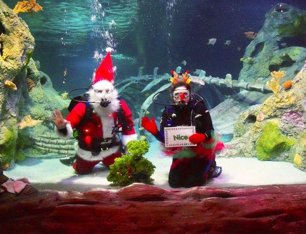 Scuba Diving Santa takes the Plunge Sea Life Aquarium
