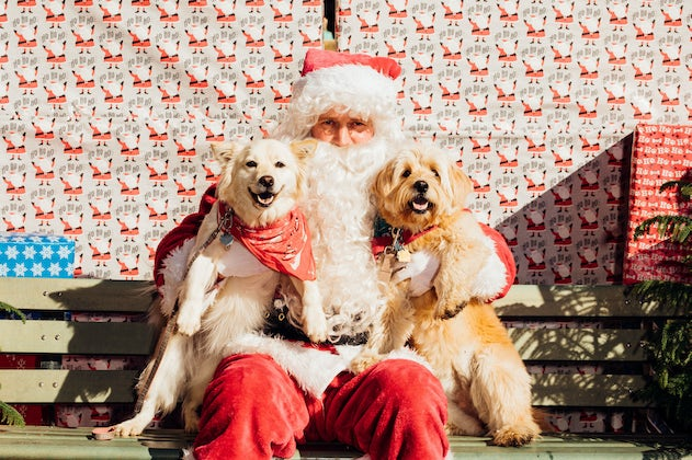 Deck the Halls at MUTTS Canine Cantina's® SANTA PAWS Event