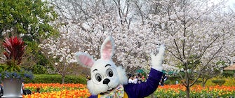 Easter Weekend at the Dallas Arboretum