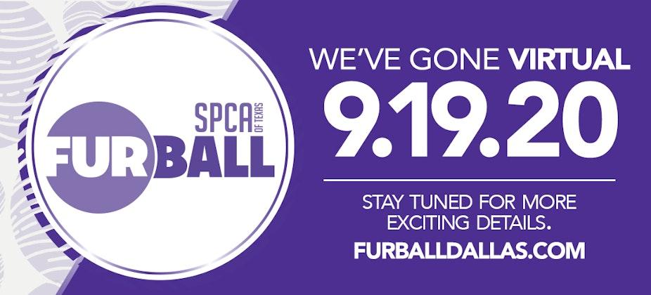 Fur Ball 2020