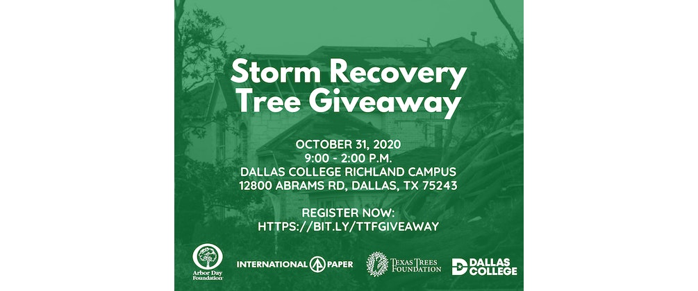 Storm Recovery Tree Giveaway