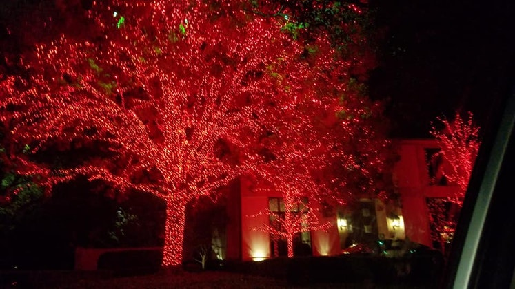 Christmas Lights, Chocolate & Sips Tours - All Ages